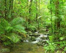 Up Close and Personal with the Daintree Rainforest