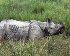 Best places to stay in the Kaziranga National Park